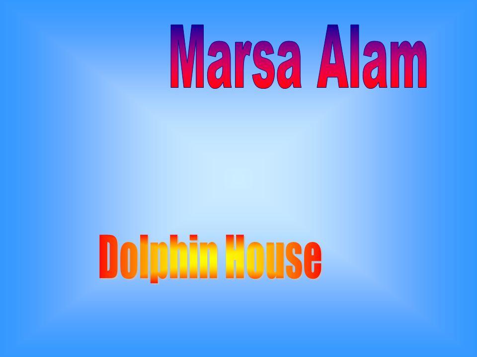Dolphin house dista 95 km dallaeroporto internazionale di Marsa Alam.