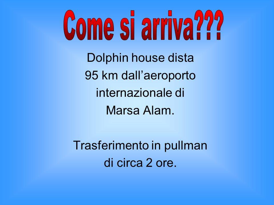 Dolphin house dista 95 km dallaeroporto internazionale di Marsa Alam. Trasferimento in pullman di circa 2 ore.