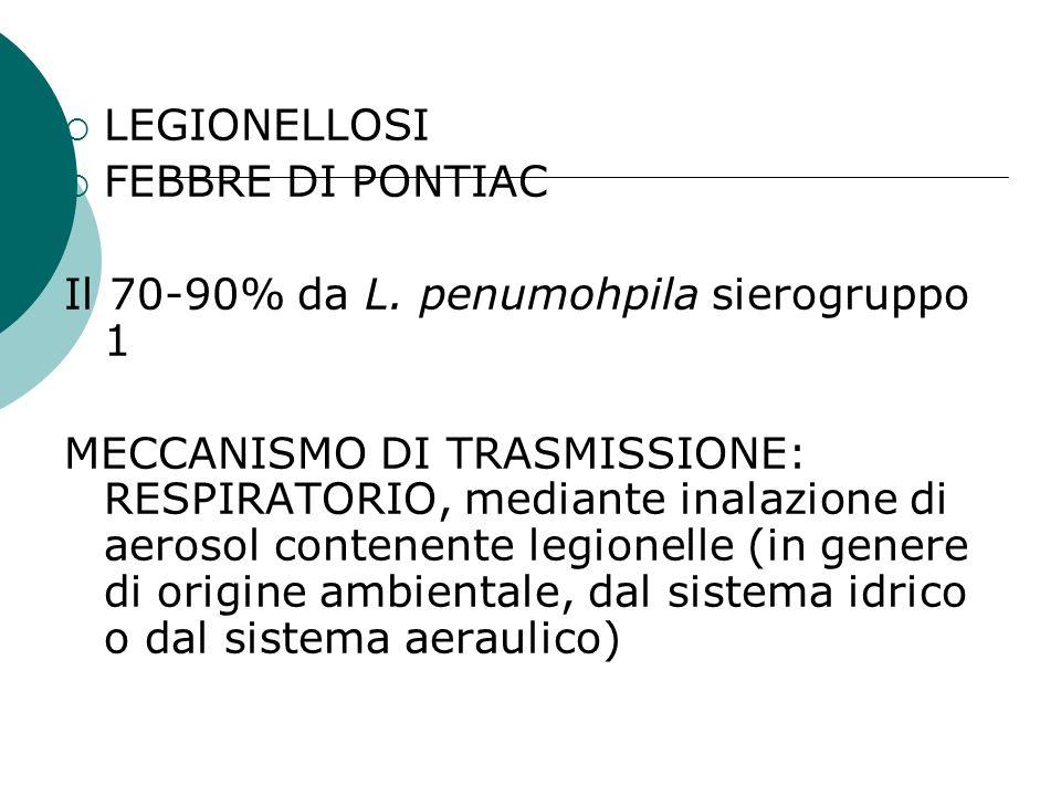 LEGIONELLOSI FEBBRE DI PONTIAC Il 70-90% da L. penumohpila sierogruppo 1 MECCANISMO DI TRASMISSIONE: RESPIRATORIO, mediante inalazione di aerosol cont