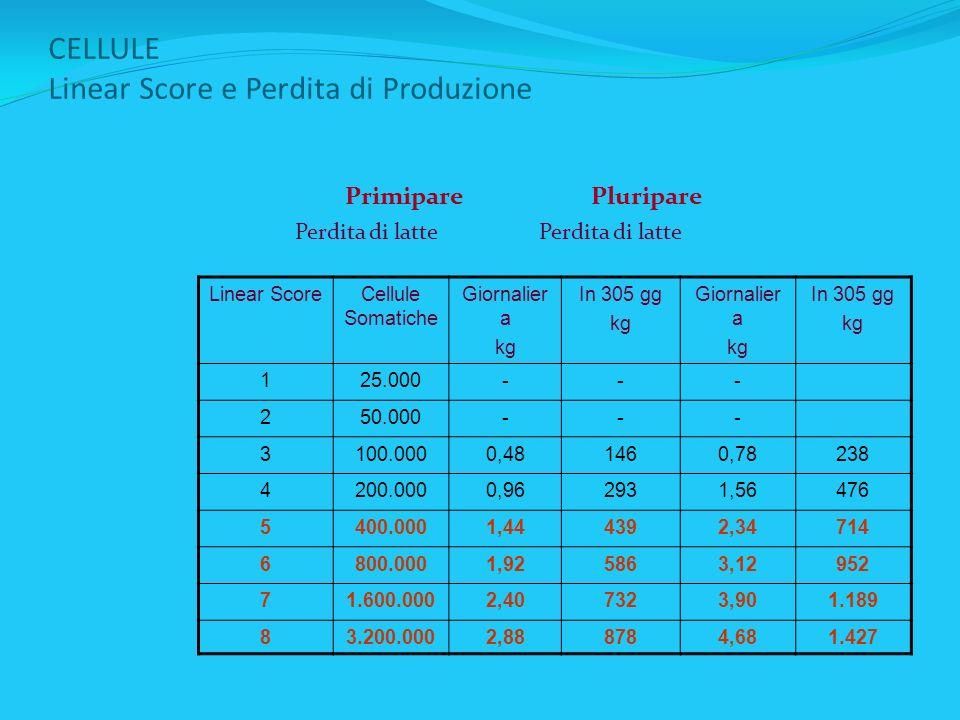 CELLULE Linear Score e Perdita di Produzione Primipare Pluripare Perdita di latte Perdita di latte Linear ScoreCellule Somatiche Giornalier a kg In 30