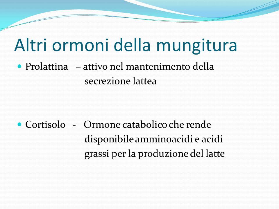 Altri ormoni della mungitura Prolattina – attivo nel mantenimento della secrezione lattea Cortisolo - Ormone catabolico che rende disponibile amminoac