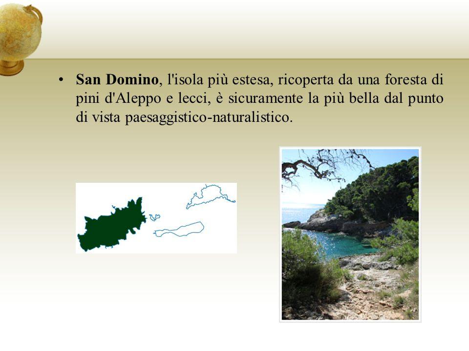 San Domino, l isola più estesa, ricoperta da una foresta di pini d Aleppo e lecci, è sicuramente la più bella dal punto di vista paesaggistico-naturalistico.