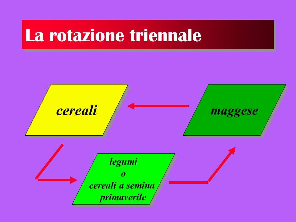 La rotazione triennale cereali maggese legumi o cereali a semina primaverile legumi o cereali a semina primaverile