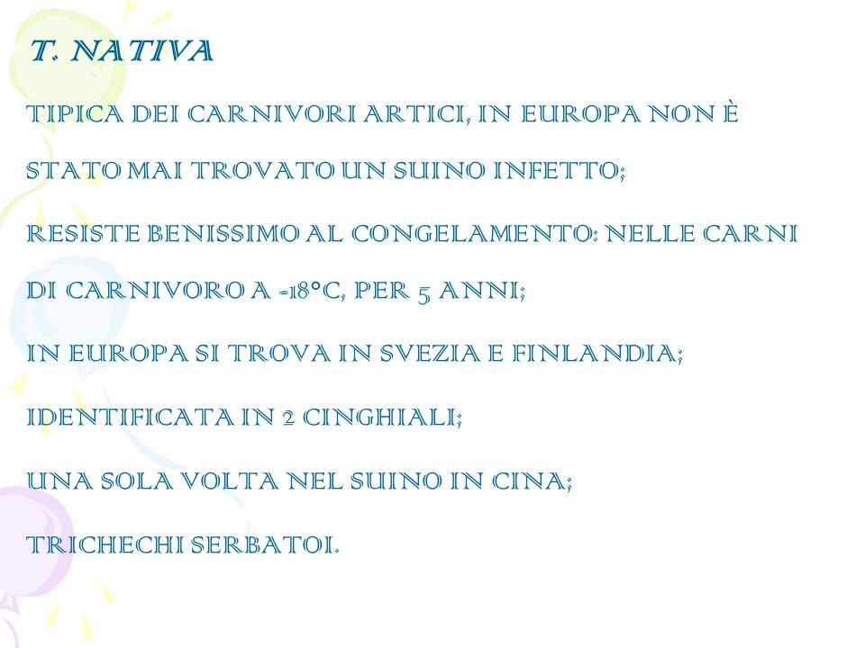 T. NATIVA TIPICA DEI CARNIVORI ARTICI, IN EUROPA NON È STATO MAI TROVATO UN SUINO INFETTO; RESISTE BENISSIMO AL CONGELAMENTO: NELLE CARNI DI CARNIVORO
