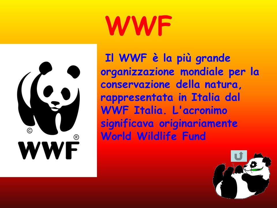 WWF Il WWF è la più grande organizzazione mondiale per la conservazione della natura, rappresentata in Italia dal WWF Italia. L'acronimo significava o