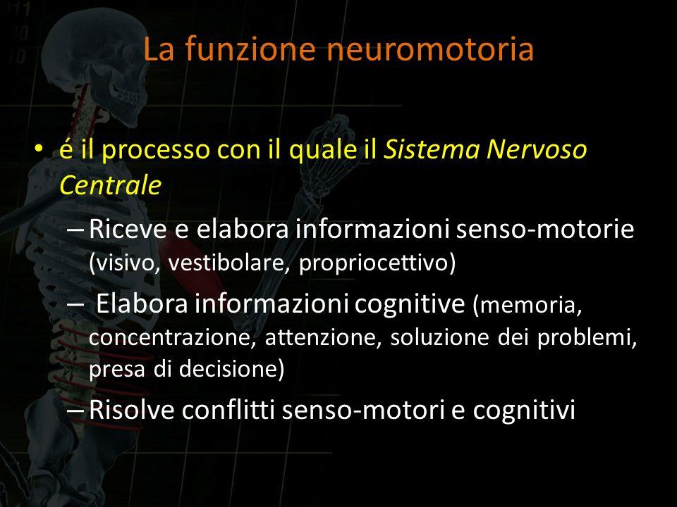 La funzione neuromotoria é il processo con il quale il Sistema Nervoso Centrale – Riceve e elabora informazioni senso-motorie (visivo, vestibolare, pr