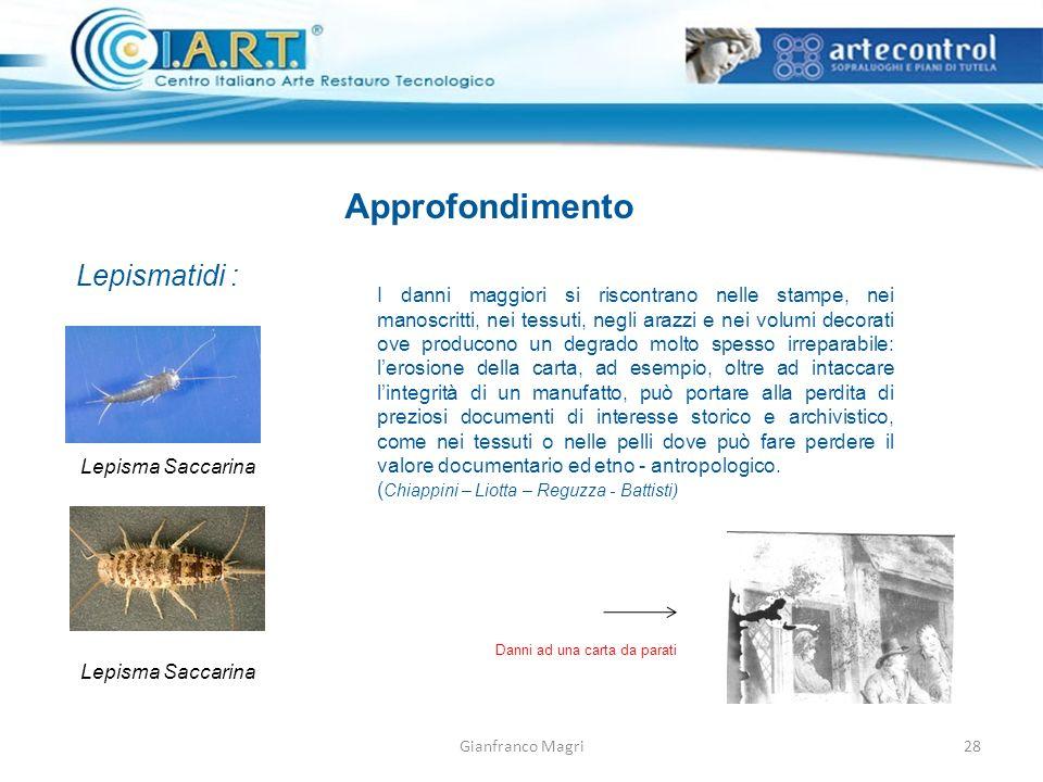 Gianfranco Magri28 Approfondimento Lepismatidi : I danni maggiori si riscontrano nelle stampe, nei manoscritti, nei tessuti, negli arazzi e nei volumi