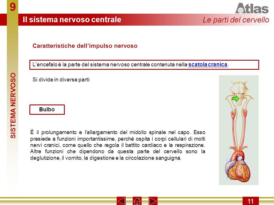 9 11 L'encefalo è la parte del sistema nervoso centrale contenuta nella scatola cranica.scatola cranica È il prolungamento e l'allargamento del midoll