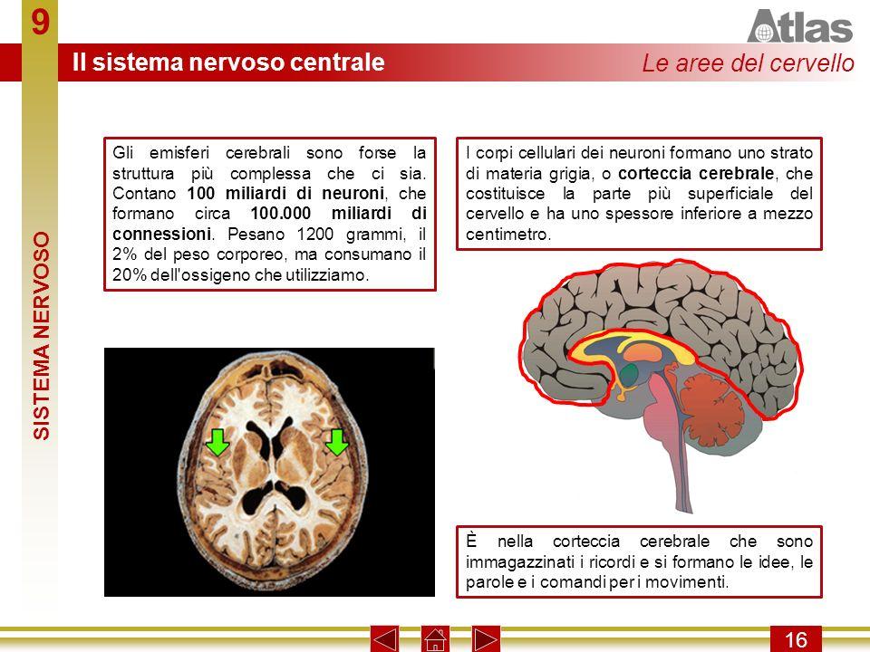 9 16 Gli emisferi cerebrali sono forse la struttura più complessa che ci sia. Contano 100 miliardi di neuroni, che formano circa 100.000 miliardi di c