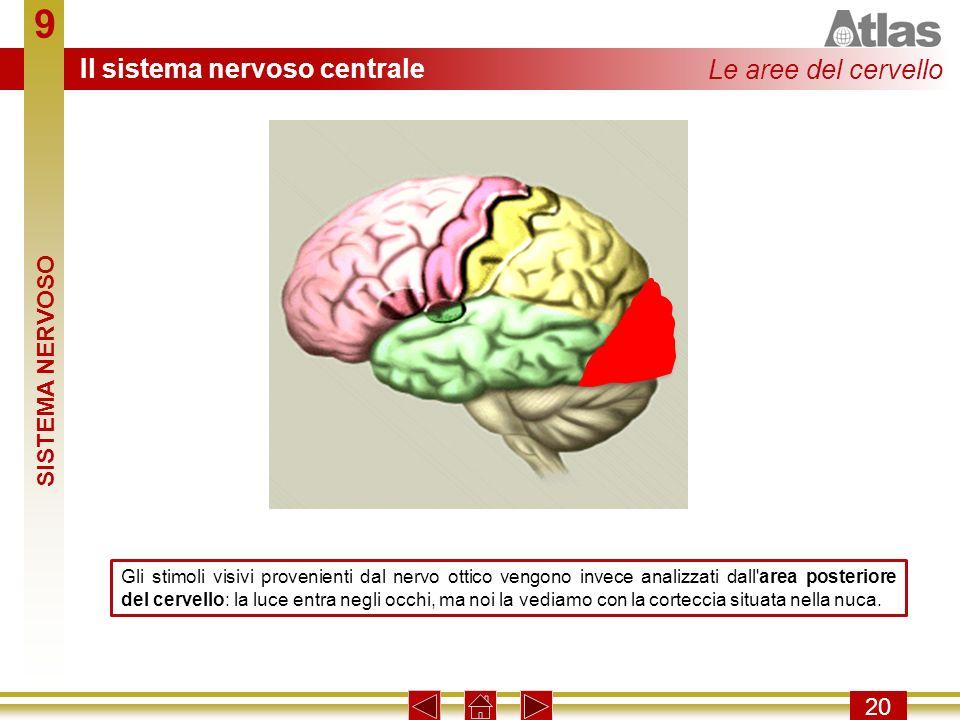 9 20 Gli stimoli visivi provenienti dal nervo ottico vengono invece analizzati dall'area posteriore del cervello: la luce entra negli occhi, ma noi la