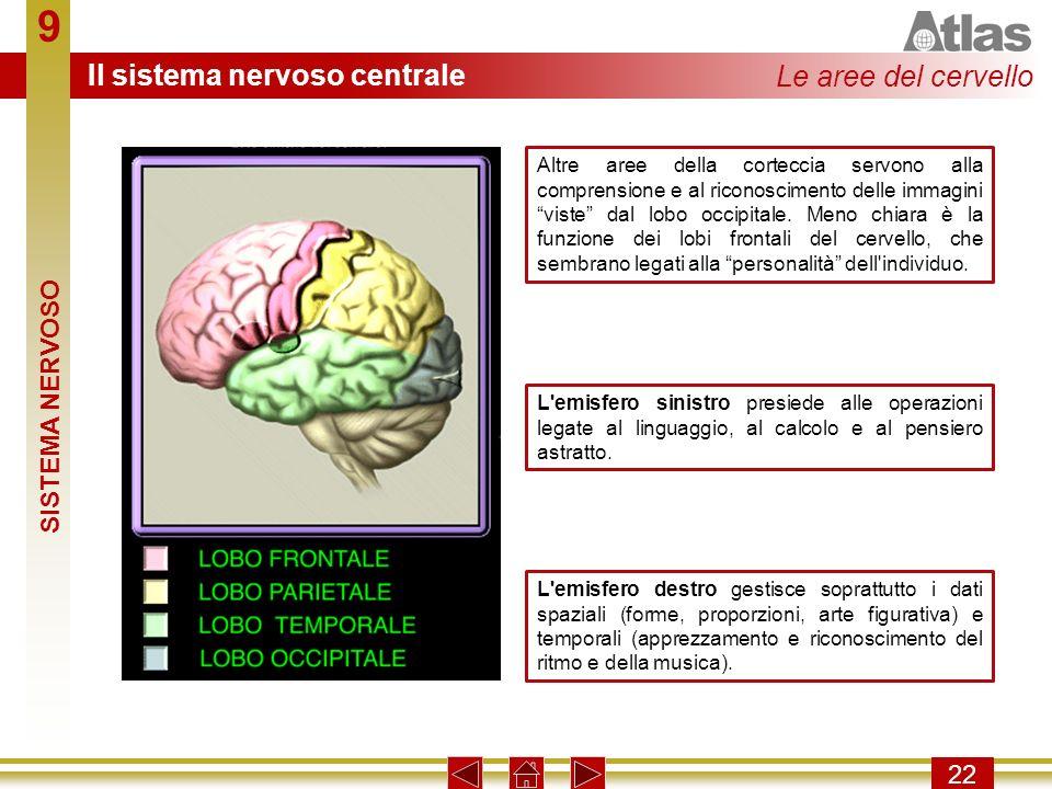 9 22 Altre aree della corteccia servono alla comprensione e al riconoscimento delle immagini viste dal lobo occipitale. Meno chiara è la funzione dei