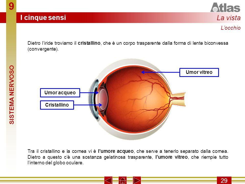 9 29 Dietro liride troviamo il cristallino, che è un corpo trasparente dalla forma di lente biconvessa (convergente). Tra il cristallino e la cornea v