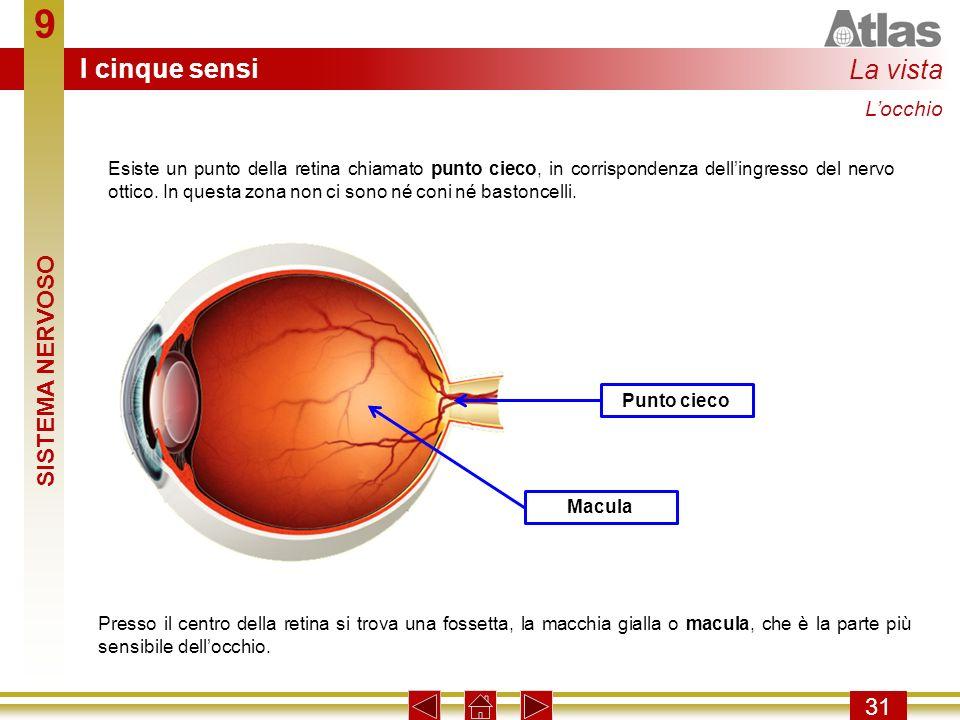9 31 Esiste un punto della retina chiamato punto cieco, in corrispondenza dellingresso del nervo ottico. In questa zona non ci sono né coni né bastonc