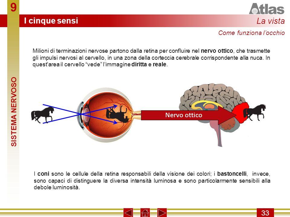 9 33 Milioni di terminazioni nervose partono dalla retina per confluire nel nervo ottico, che trasmette gli impulsi nervosi al cervello, in una zona d