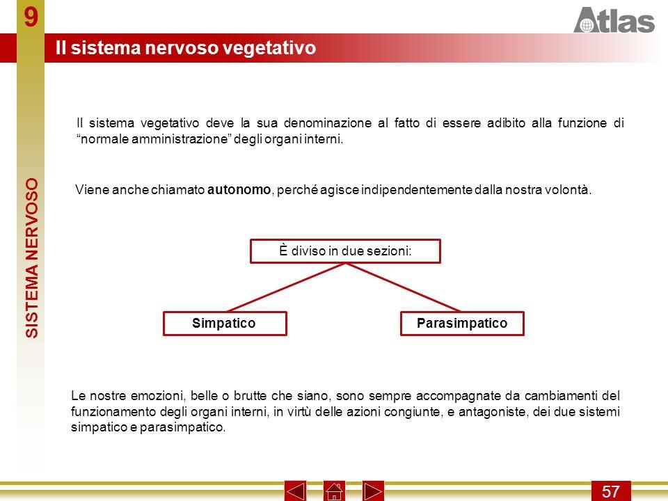 9 57 Il sistema vegetativo deve la sua denominazione al fatto di essere adibito alla funzione di normale amministrazione degli organi interni. Viene a