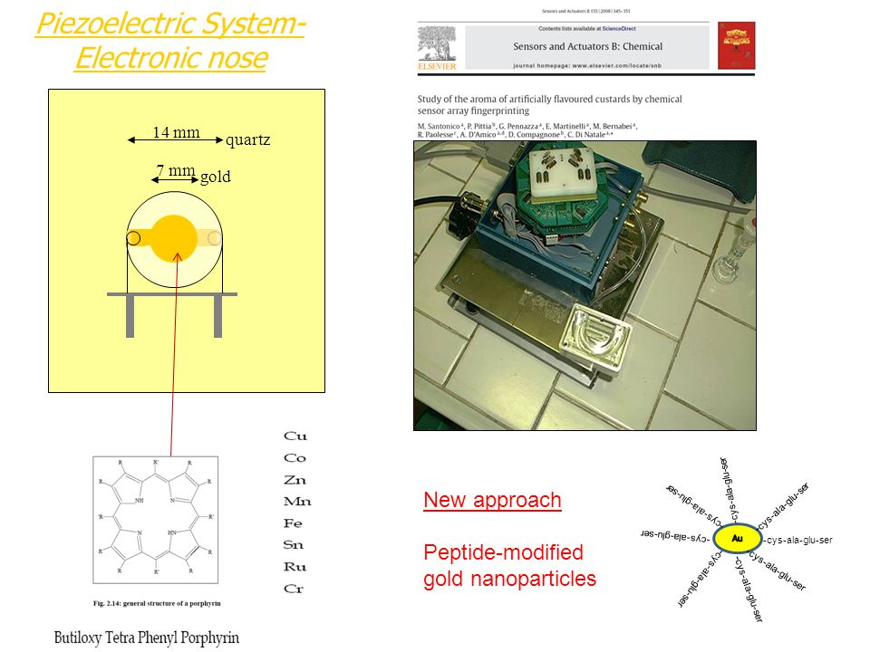 Piezoelectric System- Electronic nose quartz gold 14 mm 7 mm -cys-ala-glu-ser New approach Peptide-modified gold nanoparticles