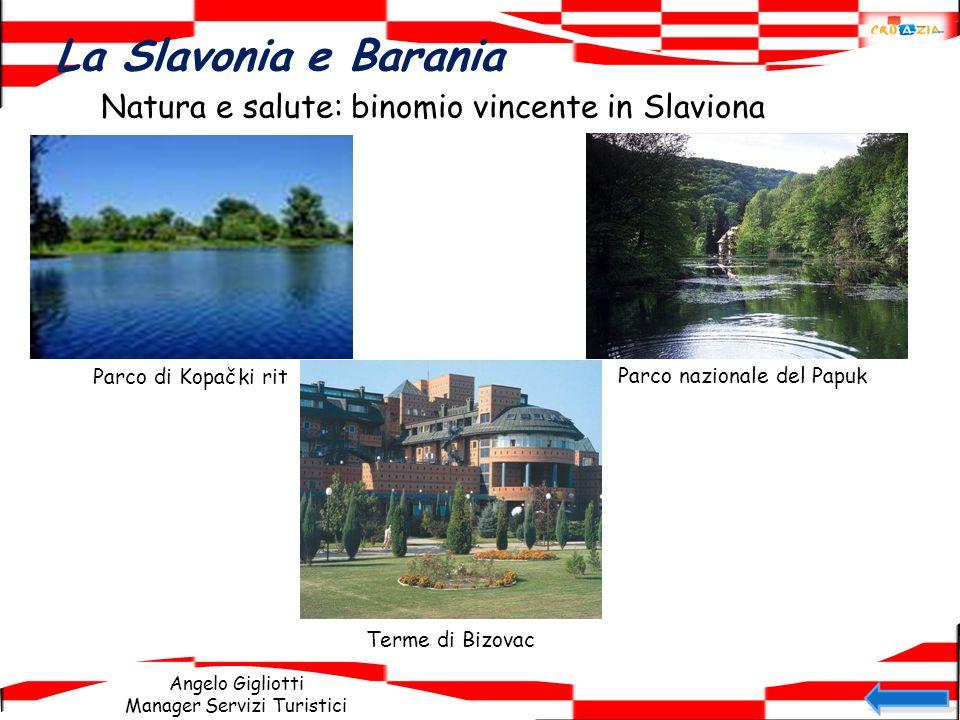 Angelo Gigliotti Manager Servizi Turistici La Slavonia e Barania Natura e salute: binomio vincente in Slaviona Parco di Kopački rit Parco nazionale de