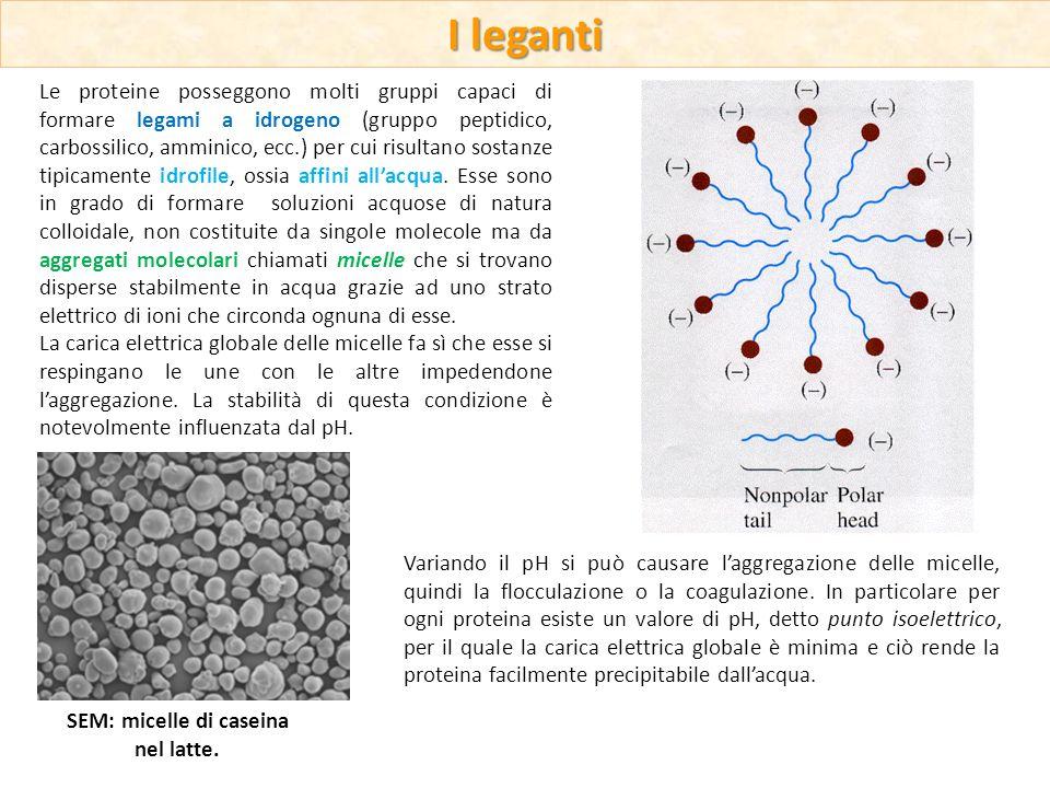 Le proteine posseggono molti gruppi capaci di formare legami a idrogeno (gruppo peptidico, carbossilico, amminico, ecc.) per cui risultano sostanze ti