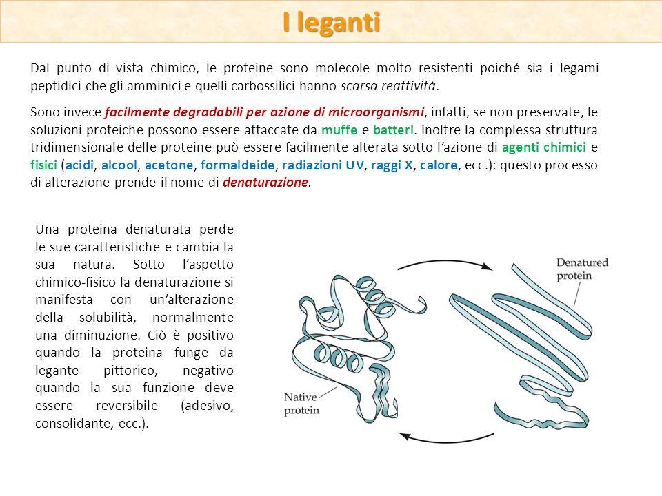 Dal punto di vista chimico, le proteine sono molecole molto resistenti poiché sia i legami peptidici che gli amminici e quelli carbossilici hanno scar