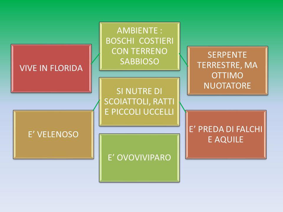 Crotalo Diamantino Orientale Luca, Andrea, Pietro