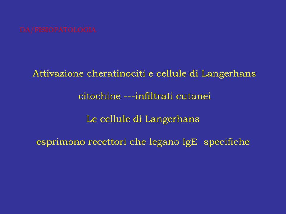 Attivazione cheratinociti e cellule di Langerhans citochine ---infiltrati cutanei Le cellule di Langerhans esprimono recettori che legano IgE specific