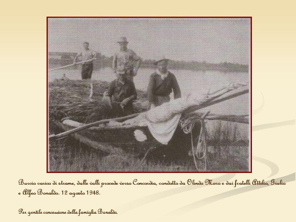 Burcio carico di strame, dalle valli procede verso Concordia, condotto da Olindo Moro e dai fratelli Attilio, Giulio e Alfeo Bonaldo. 12 agosto 1948.