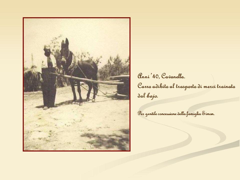Anni 40, Cavanella. Carro adibito al trasporto di merci trainato dal bajo. Per gentile concessione della famiglia Simon.