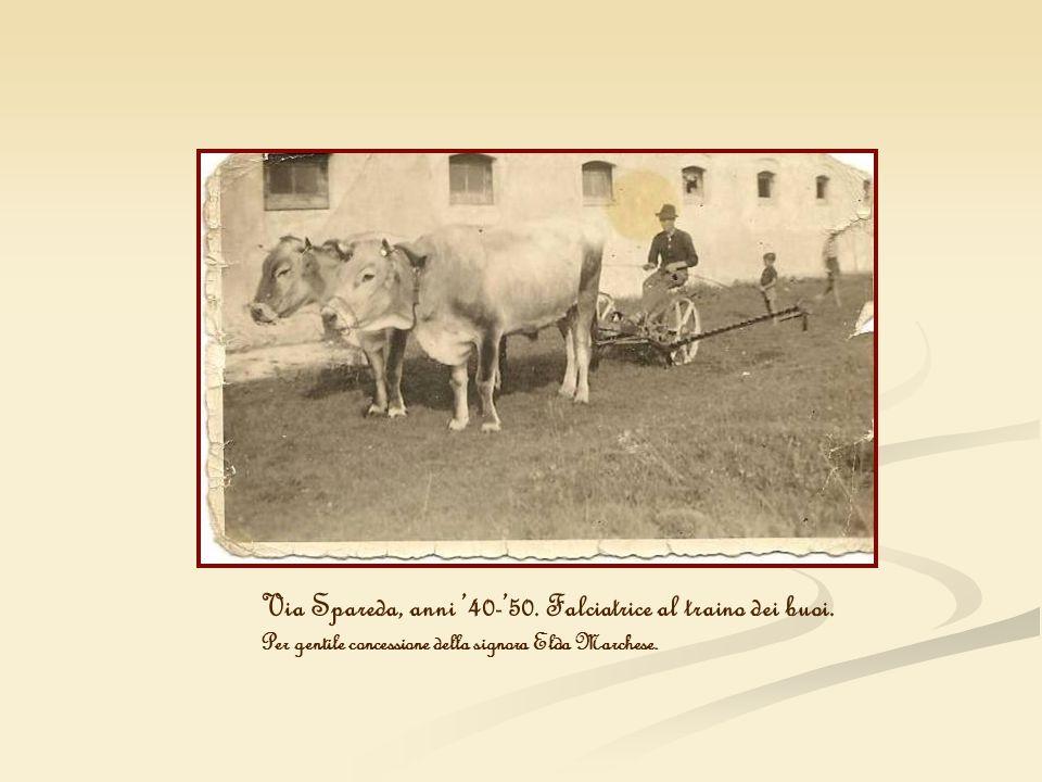 Via Spareda, anni 40-50. Falciatrice al traino dei buoi. Per gentile concessione della signora Elda Marchese.