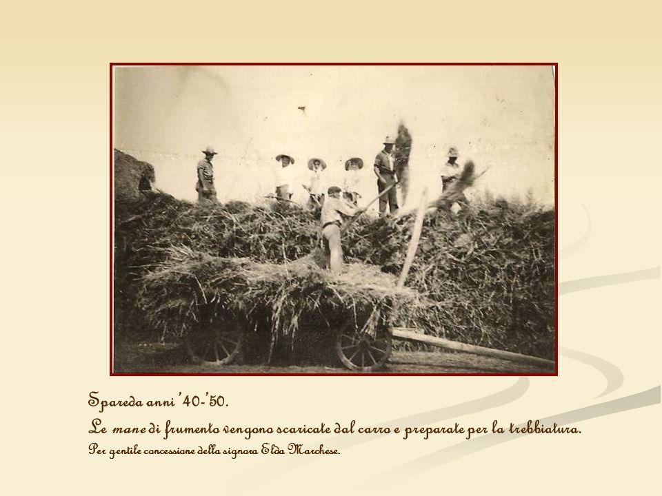 Spareda anni 40-50. Le mane di frumento vengono scaricate dal carro e preparate per la trebbiatura. Per gentile concessione della signora Elda Marches