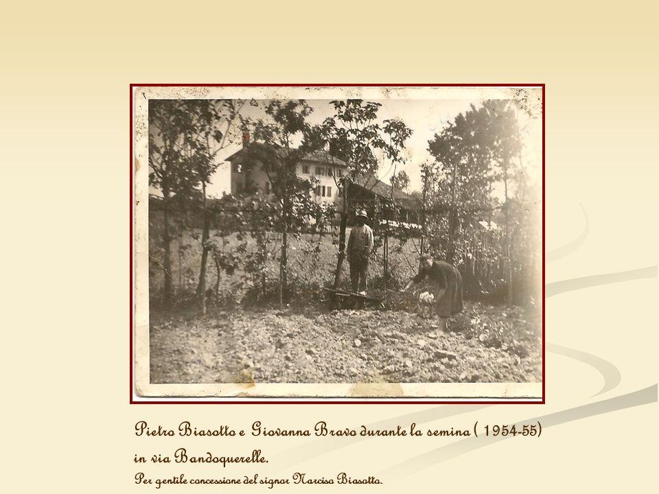 Pietro Biasotto e Giovanna Bravo durante la semina ( 1954-55) in via Bandoquerelle. Per gentile concessione del signor Narciso Biasotto.