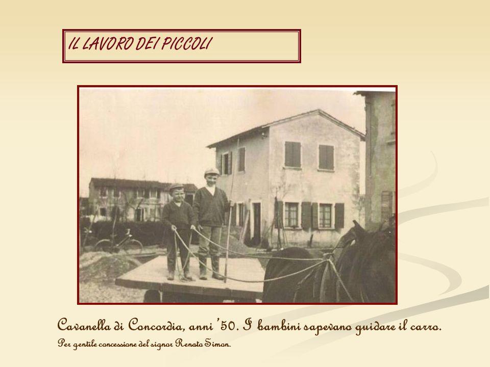 IL LAVORO DEI PICCOLI Cavanella di Concordia, anni 50. I bambini sapevano guidare il carro. Per gentile concessione del signor Renato Simon.