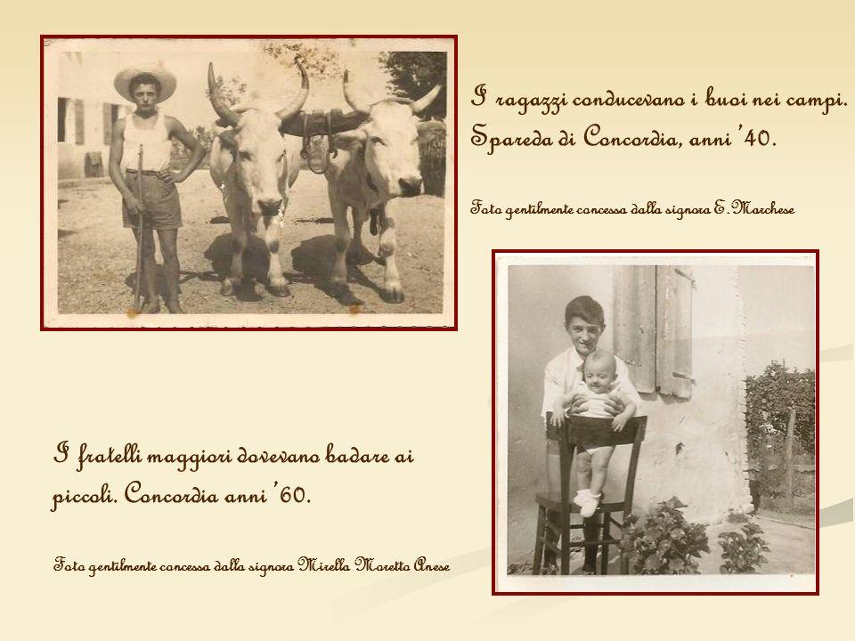 I ragazzi conducevano i buoi nei campi. Spareda di Concordia, anni 40. Foto gentilmente concessa dalla signora E.Marchese I fratelli maggiori dovevano