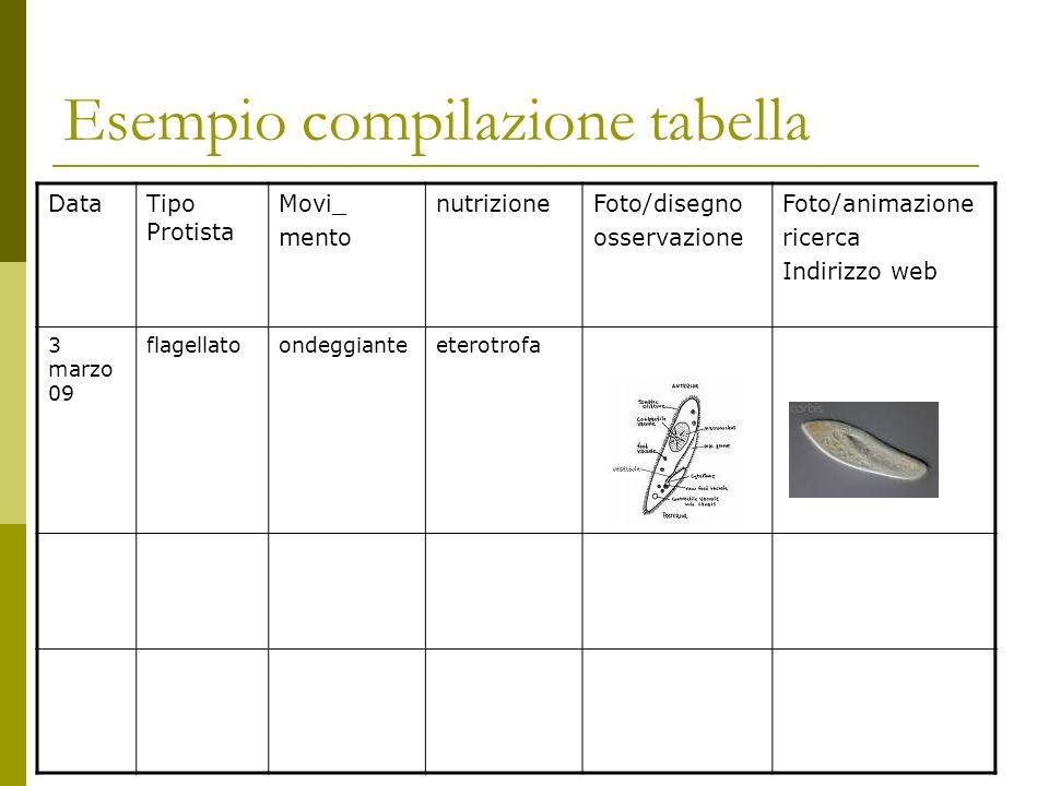 Esempio compilazione tabella DataTipo Protista Movi_ mento nutrizioneFoto/disegno osservazione Foto/animazione ricerca Indirizzo web 3 marzo 09 flagellatoondeggianteeterotrofa
