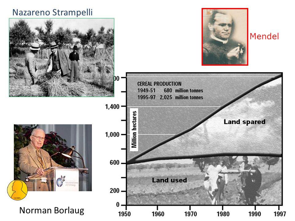 Norman Borlaug Nazareno Strampelli Mendel