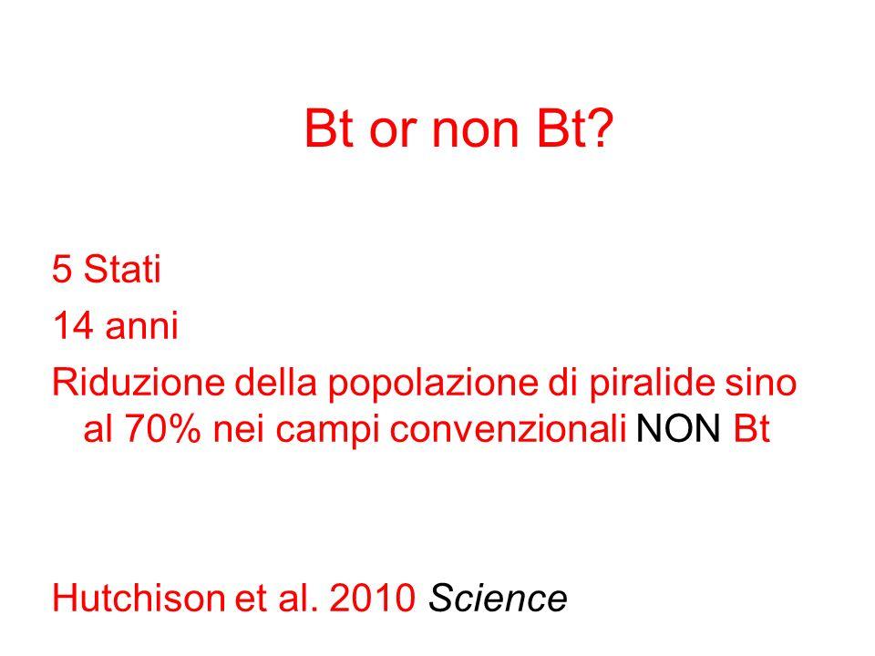 Bt or non Bt.
