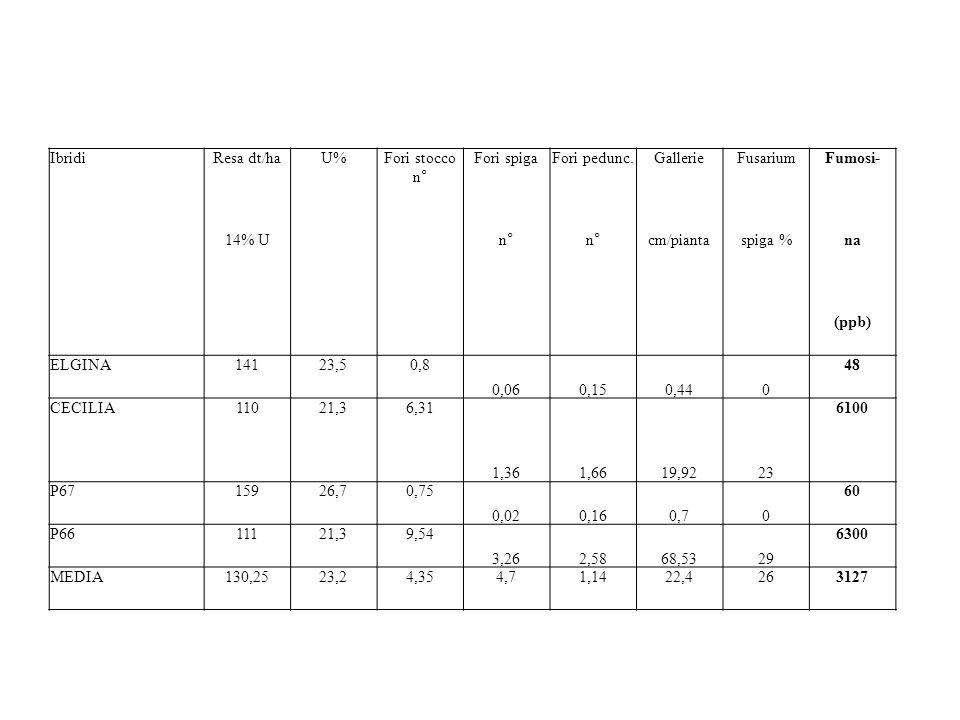 IbridiResa dt/haU%Fori stocco n° Fori spigaFori pedunc.GallerieFusariumFumosi- 14% Un° cm/piantaspiga %na (ppb) ELGINA14123,50,8 0,060,150,440 48 CECILIA11021,36,31 1,361,6619,9223 6100 P6715926,70,75 0,020,160,70 60 P6611121,39,54 3,262,5868,5329 6300 MEDIA130,2523,24,354,71,1422,4263127