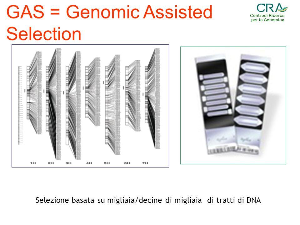 Centrodi Ricerca per la Genomica GAS = Genomic Assisted Selection Selezione basata su migliaia/decine di migliaia di tratti di DNA