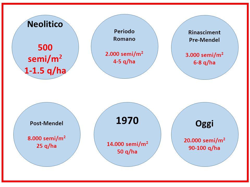 Neolitico 500 semi/m 2 1-1.5 q/ha Periodo Romano 2.000 semi/m 2 4-5 q/ha Rinasciment Pre-Mendel 3.000 semi/m 2 6-8 q/ha Post-Mendel 8.000 semi/m 2 25 q/ha 1970 14.000 semi/m 2 50 q/ha Oggi 20.000 semi/m 2 90-100 q/ha