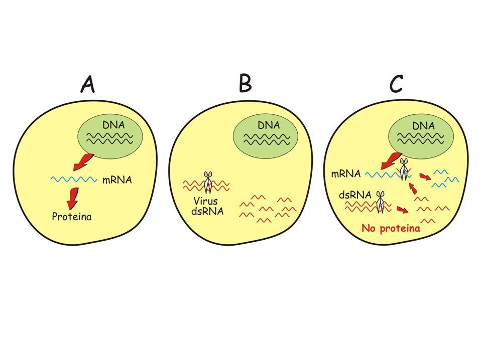 Filmato RNA
