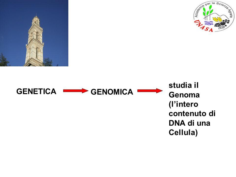 GENETICA GENOMICA studia il Genoma (lintero contenuto di DNA di una Cellula)