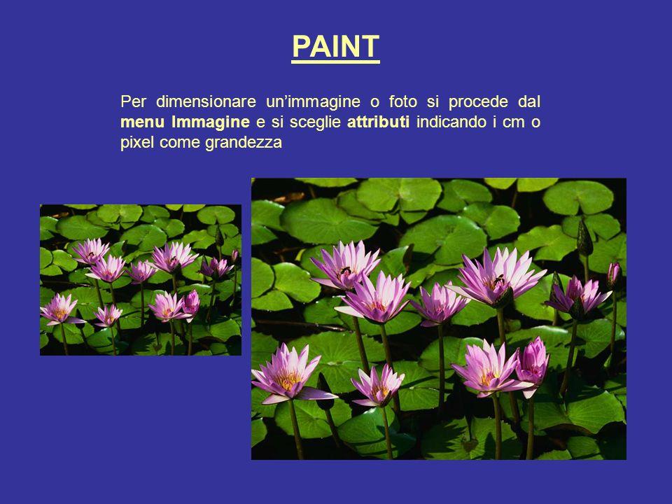 PAINT Per dimensionare unimmagine o foto si procede dal menu Immagine e si sceglie attributi indicando i cm o pixel come grandezza
