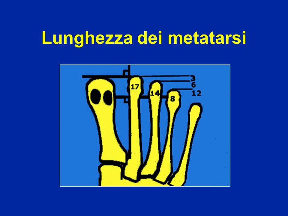 Lunghezza dei metatarsi