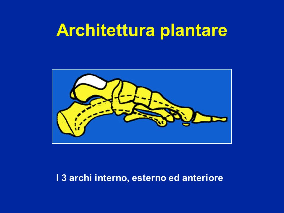 Architettura plantare I 3 archi interno, esterno ed anteriore
