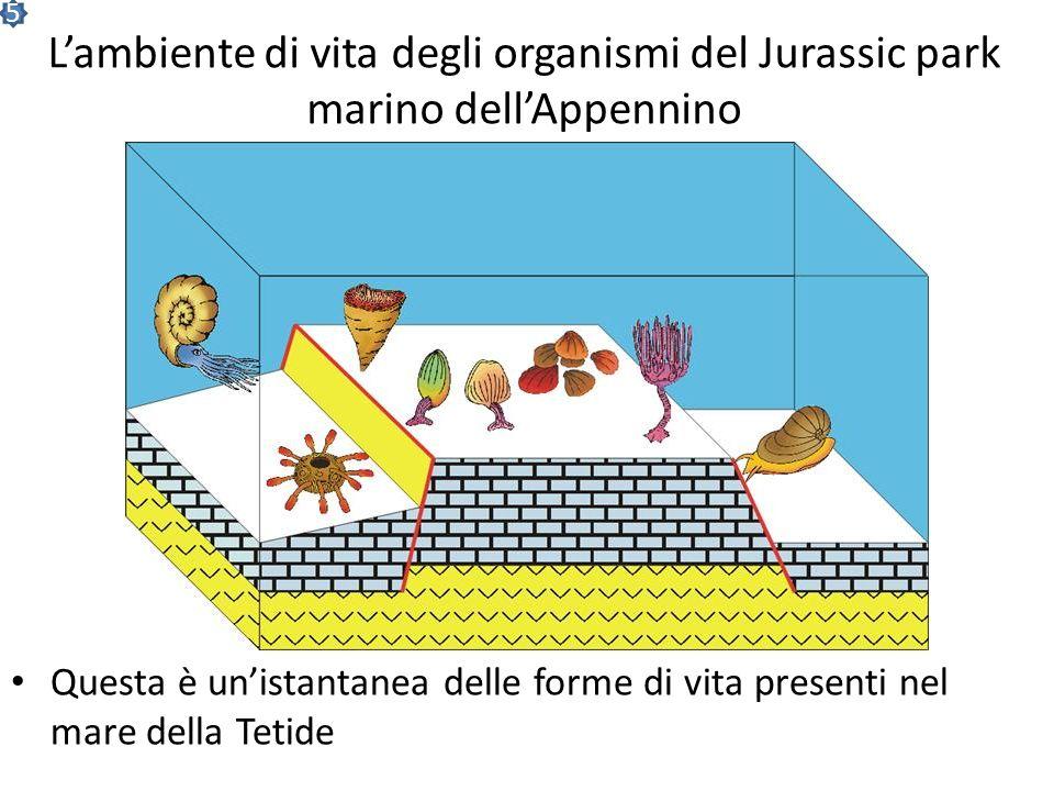 disegni CENF Salve, sono lIttiosauro Marta… Gli abitanti del Jurassic Park marino Io sono un Crinoide o giglio di mare Io sono un Corallo Io sono un R