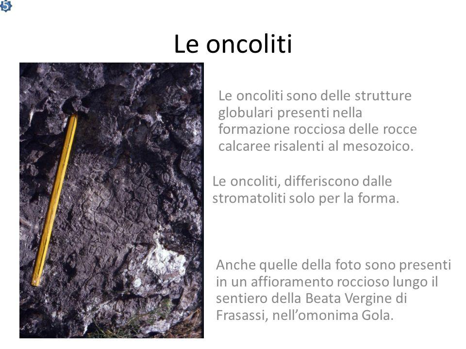 Spunti di Attualismo: Le stromatoliti e la Shark Bay Si pensava che le stromatoliti fossero scomparse. Invece sono state recentemente scoperte in Aust