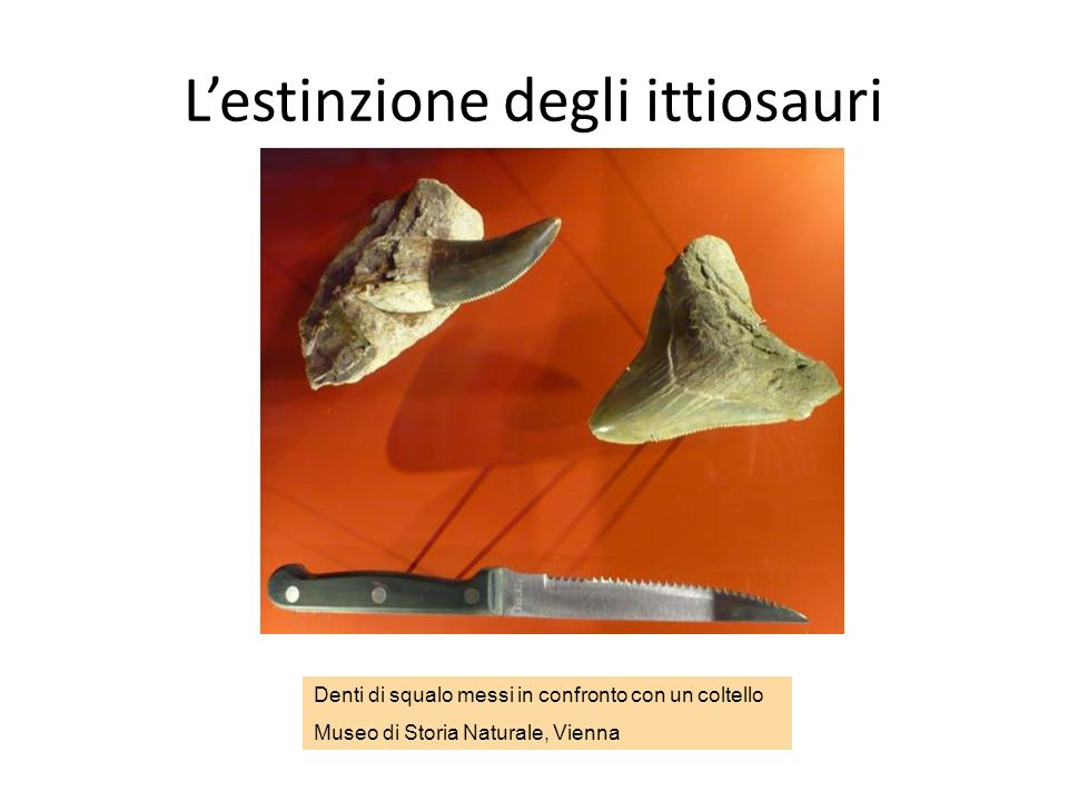Perché littiosauro si estinse? Visse nel Giurassico e si estinse prima della grande estinzione avvenuta 65 milioni di anni fa. Perché? Perché probabil