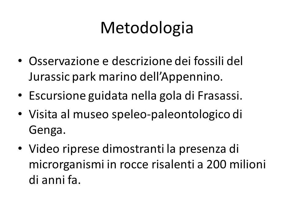 Metodologia Osservazione e descrizione dei fossili del Jurassic park marino dellAppennino.
