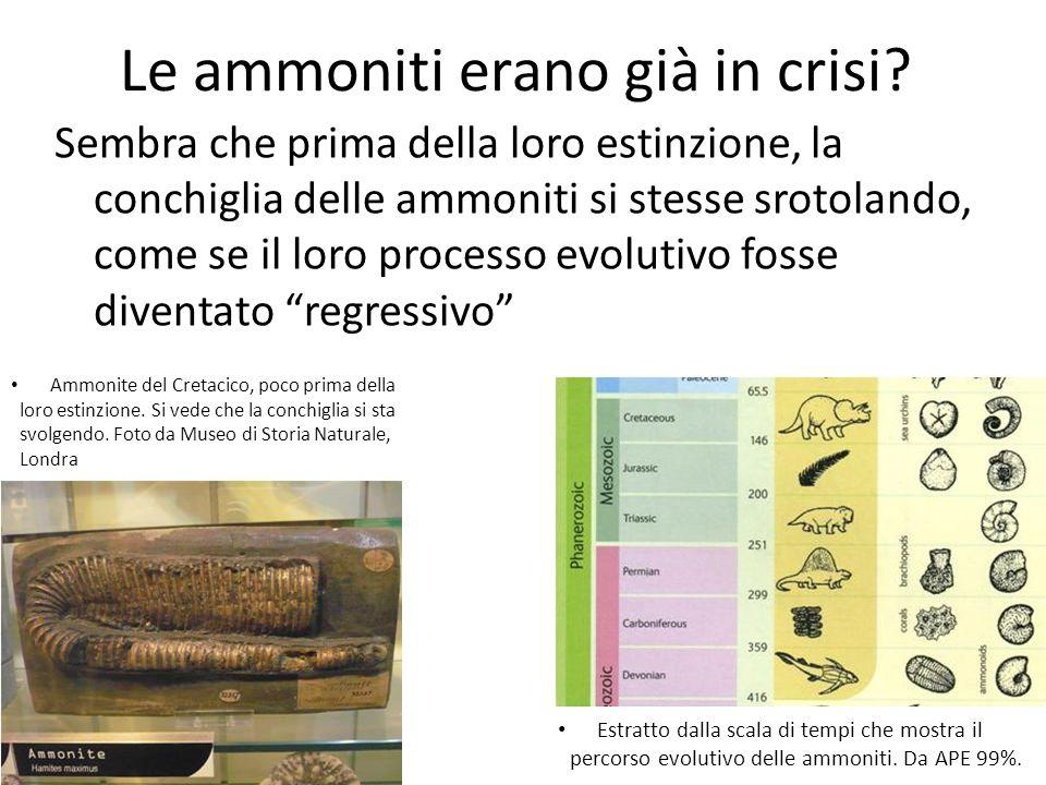 Le cause dellestinzione Le cause dellestinzione delle specie dei dinosauri, delle ammoniti, delle belemniti e gli altri animali non più presenti sulla