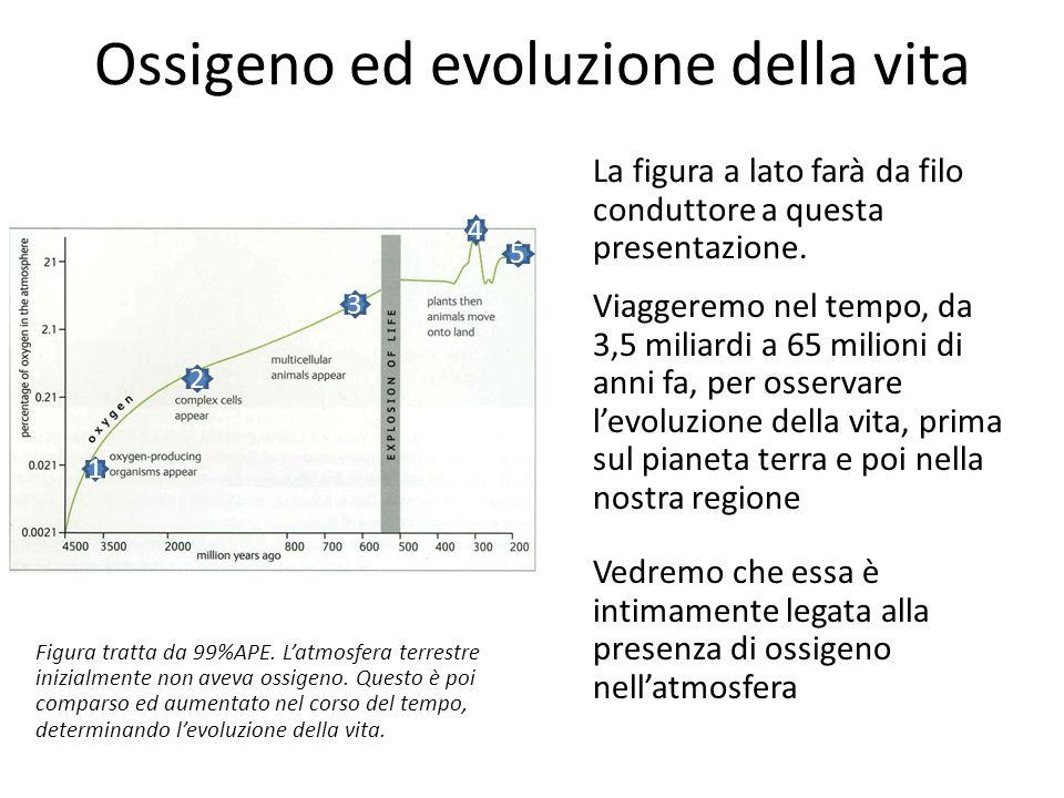 Ossigeno ed evoluzione della vita 1 2 3 4 5 Figura tratta da 99%APE. Latmosfera terrestre inizialmente non aveva ossigeno. Questo sé poi comparso ed a