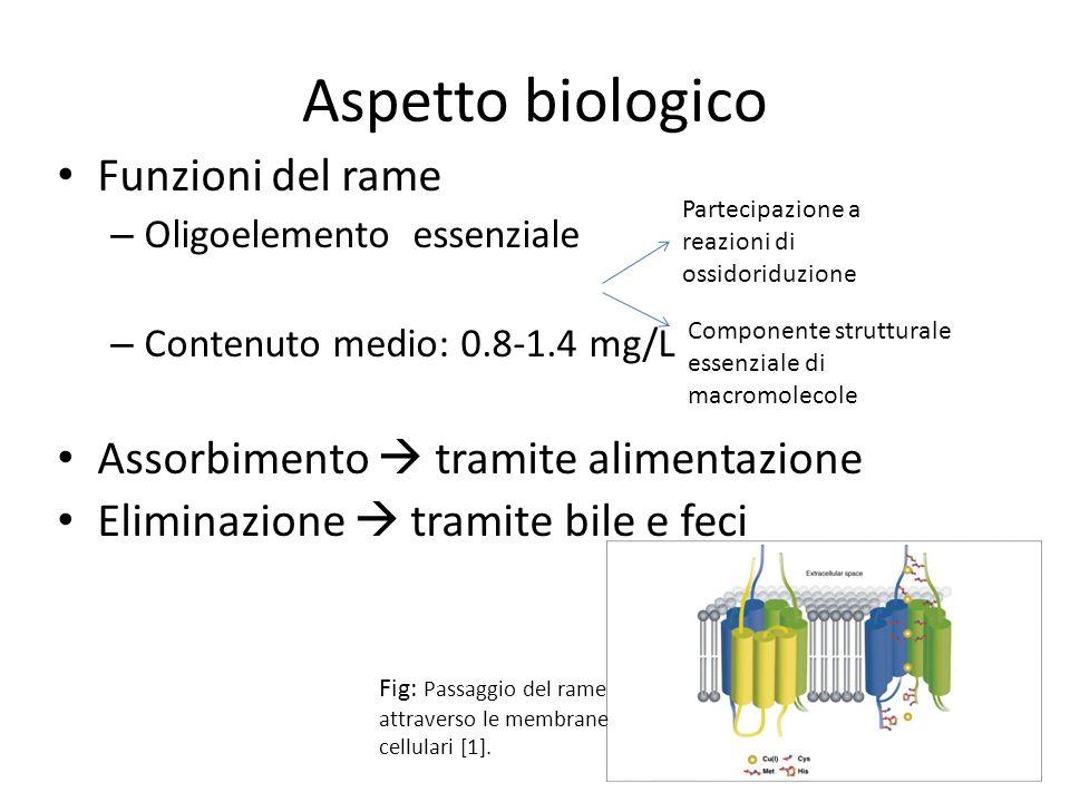 Aspetto biologico Funzioni del rame – Oligoelemento essenziale – Contenuto medio: 0.8-1.4 mg/L Assorbimento tramite alimentazione Eliminazione tramite
